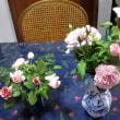 蒸し暑い中の庭の花 170725