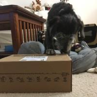 新しいお楽しみ箱