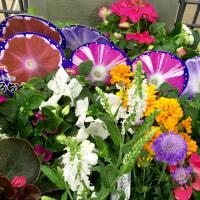庭の手入れと母の記憶