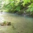 アマゴの渓(その16)