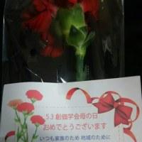29・毎年、金剛堂様に頂く・カ-ネ-ンションの花・ありがとう