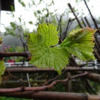雨上がりの庭巡り