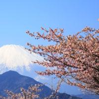富士とさくら
