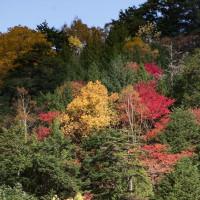 ザ★紅葉、笠ヶ岳のふもと ■2016_10_18