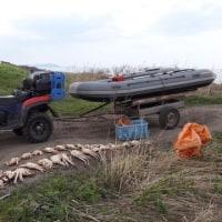 ドリンスク地区で漁業者を装いタラバガニを密漁