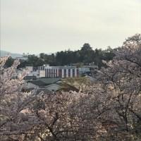 千手院から松江城を望む