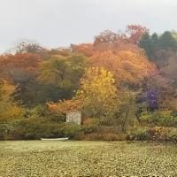 六甲山上で秋満喫♪
