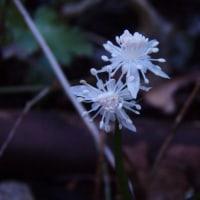 1月、2月の花