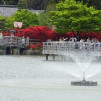 八条池 (2)