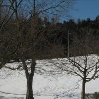 朝少し雪・・・でも直に止みました。