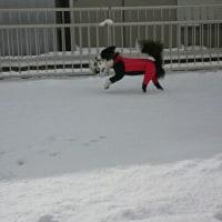 雪だー!!