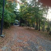 四季2016(14) 楓の紅葉、落ち葉の道が美しい