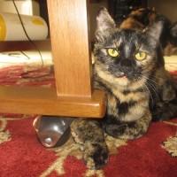 動物愛護先進国の欧米人の里親さん宅に嫁入りした2匹の猫たちに再会しました(*^_^*)