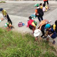 奈佐の浜プロジェクトが開催されました。