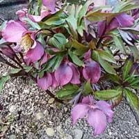 春・三月、冬眠から、目覚めた、花たち。・・・・