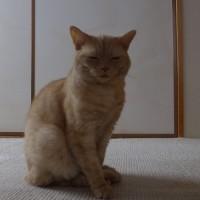 昨日の ネコ =^_^=