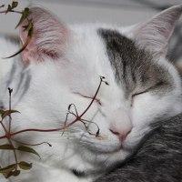 猫探訪・・お久しぶりの猫ちゃん