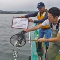 ヒラメとトラフグの放流 <江ノ島・大楠・長井>