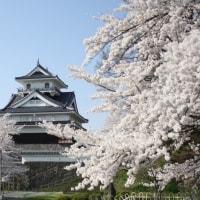 Beautiful Sakura and Kaminoyama Castle in Yamagatad