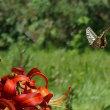 蝶々・・・