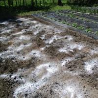 5月の畑作業開始