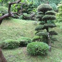 緑滴る季節