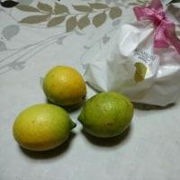 ♪ 幼馴染みの思い出は、 「ほんとうに、 青い檸檬の味がするかしら、ね?」