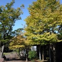 神奈川県立三ツ池公園をぶらぶら。