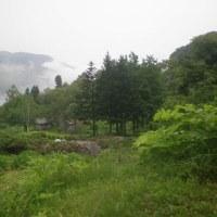 夏が来れば やっぱり 「尾瀬」と「ルルブの里」!」②(20090616-18)