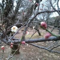 春はそこまで・・・?