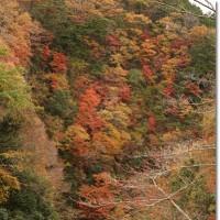 晩秋の彩り**笹川湖周辺