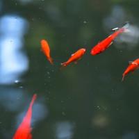 奈良・室生寺の紅葉風景・・・9