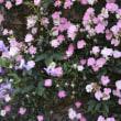 GardenShedの夢乙女