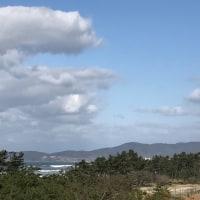 防風林と海