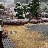雪が降ってきた!