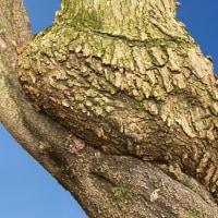 樹木が主役の一枚ー23