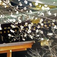 初詣2 冬桜