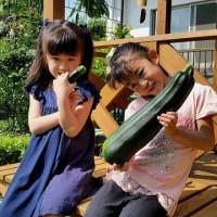 夏野菜の収穫 (^o^)