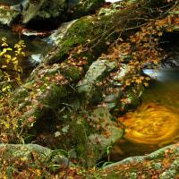 11月23日 晩秋の渓流