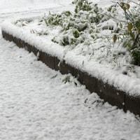 まじか?Snowfall, at Novenber.