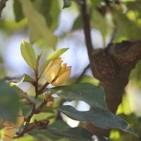 花木点景:光のいろ―唐種招霊