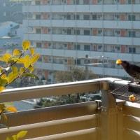 ジャッキーを癒してくれる鳥たち birds make me happy