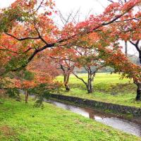 四王寺山の紅葉 11月20日