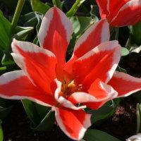 春到来・・春を散策(1/2)