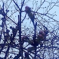 咲くなっ、桜よ!?   の巻