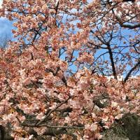 2月8日阿佐ヶ谷「スタッカート」で歌います
