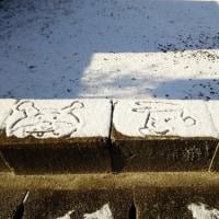 初雪、猫散歩・イオンまで買い物に歩く