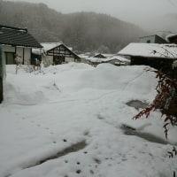 また雪になりました。