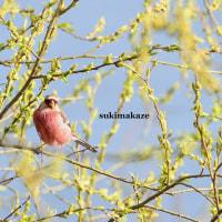 春らしく 4