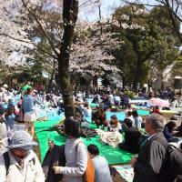 今年の桜シリーズ2